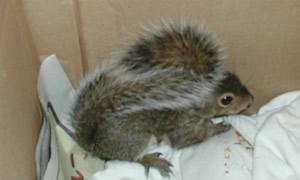 squirrelbushytail.jpg
